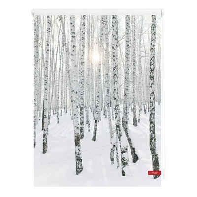Seitenzugrollo »Klemmfix Motiv Birkenwald«, LICHTBLICK ORIGINAL, Lichtschutz, ohne Bohren, freihängend, bedruckt