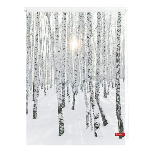 Seitenzugrollo »Klemmfix Motiv Birkenwald«, LICHTBLICK, Lichtschutz, ohne Bohren, freihängend, bedruckt