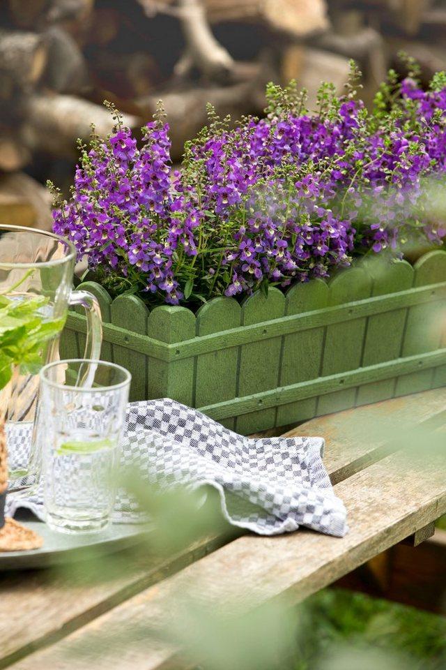 Blumenkasten »Country«, grün in grün