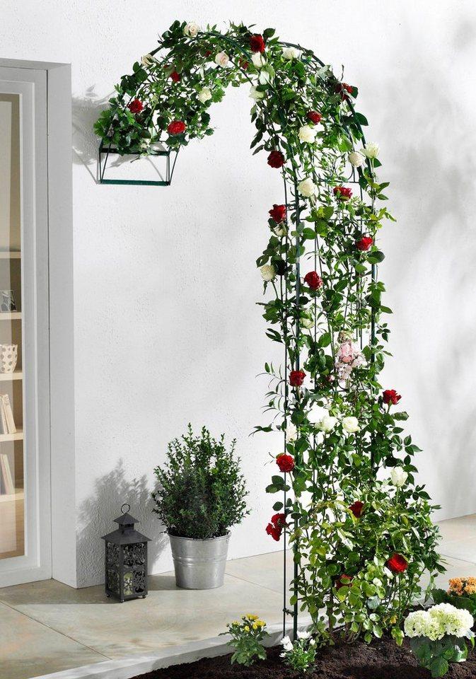 rosenbogen baccara online kaufen otto. Black Bedroom Furniture Sets. Home Design Ideas