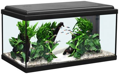 aquatlantis aquarium advance 60 led kaufen otto. Black Bedroom Furniture Sets. Home Design Ideas