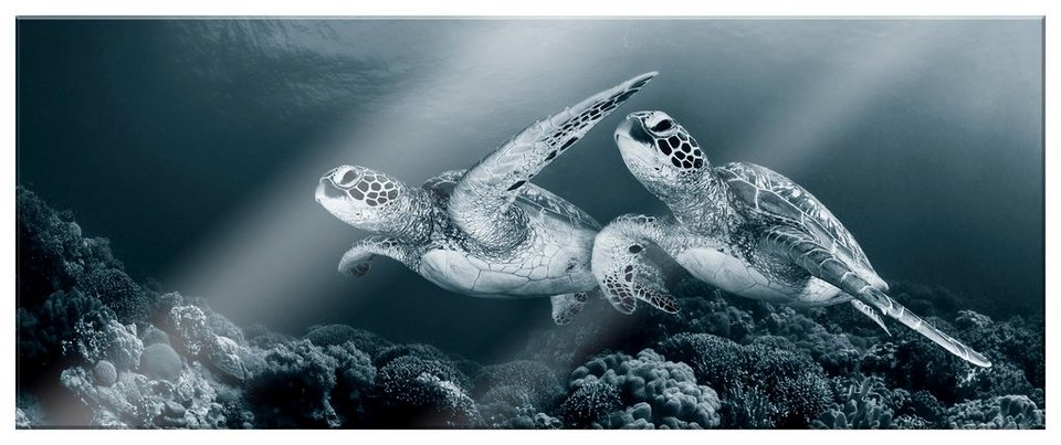 Home affaire Acrylglasbild »Narchuk-Schildkröten«, 80/30 cm in grau