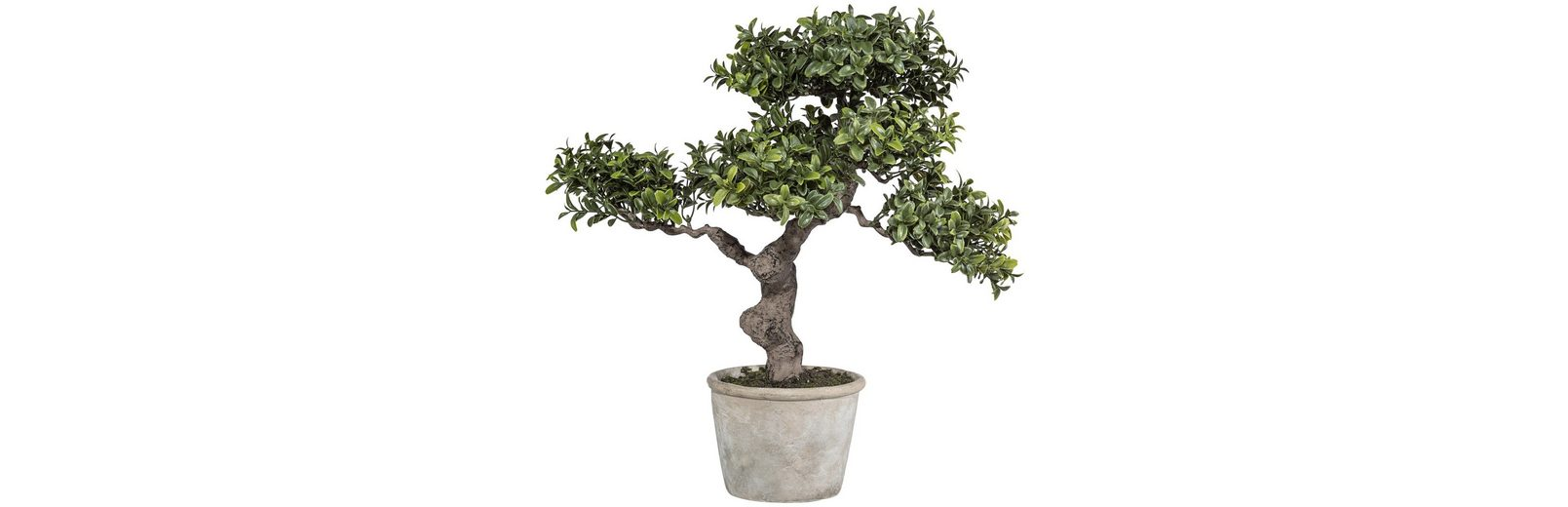 Kunstpflanze »Bonsai Murraya« inkl. Pflanzgefäß