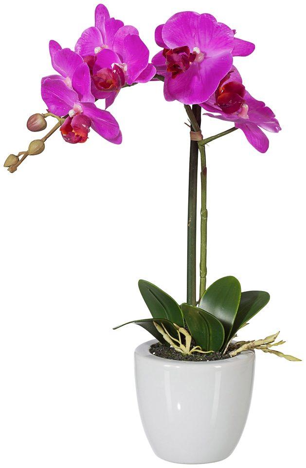 Kunstpflanze »Phalenopsis« lila inkl. Pflanzgefäß (H: 33 cm)