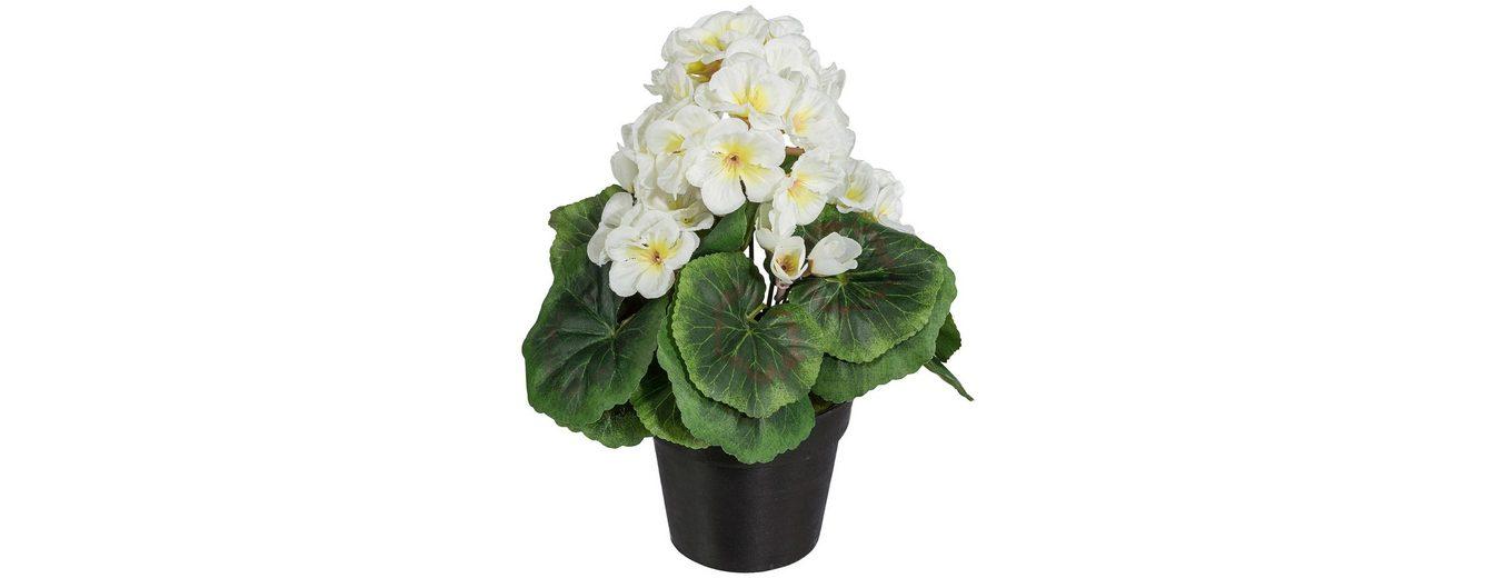 Kunstpflanze »Geranienbusch« weiß inkl. Pflanzgefäß (3 Pfl.)