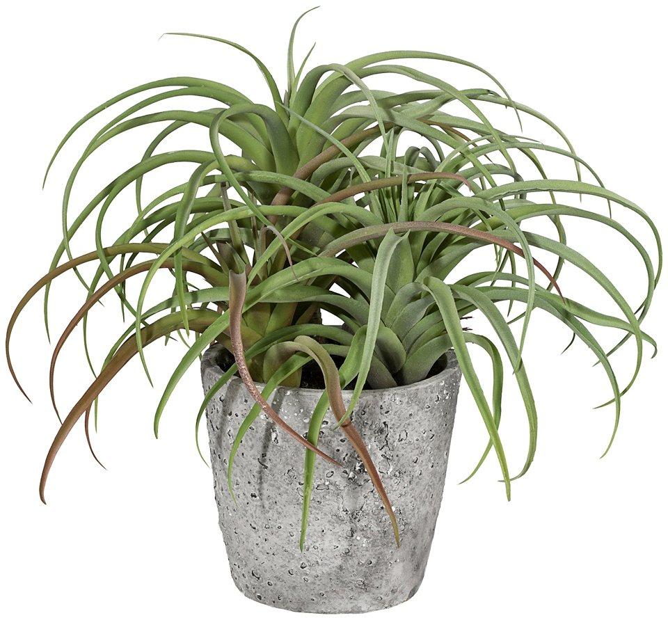 Kunstpflanze »Tillandsie« inkl. Pflanzgefäß in grün