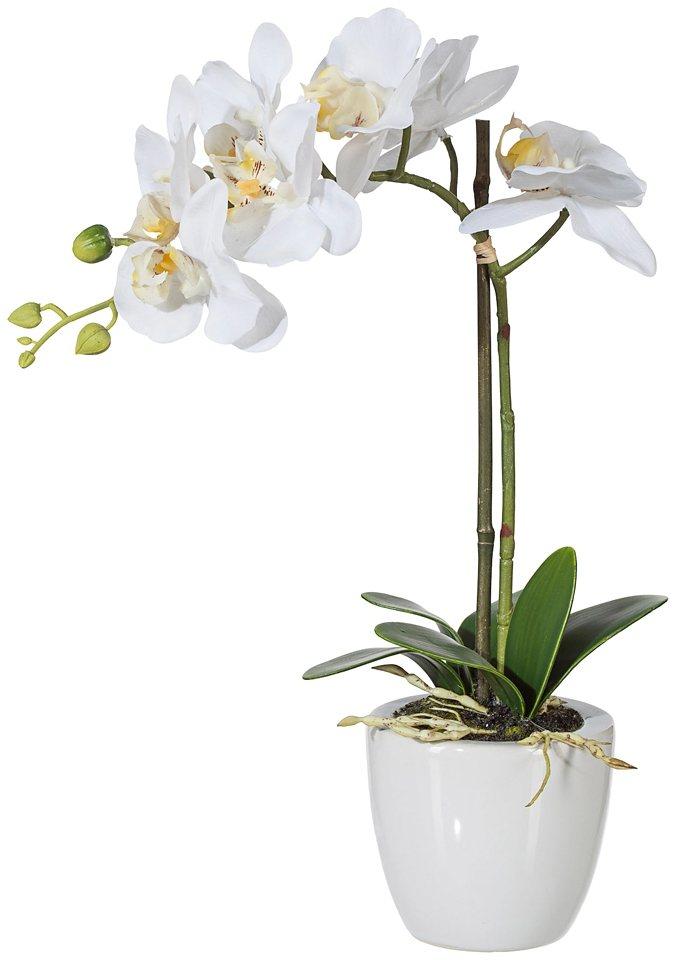 Kunstpflanze »Phalenopsis« weiß inkl. Pflanzgefäß (H: 33 cm) in weiß