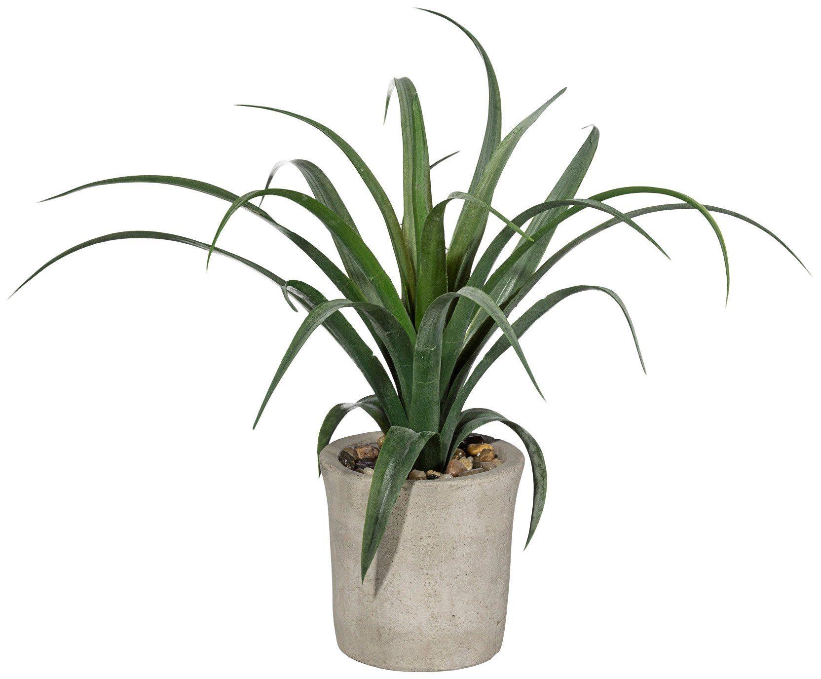Kunstpflanze »Agave« inkl. Pflanzgefäß (H: 35 cm)
