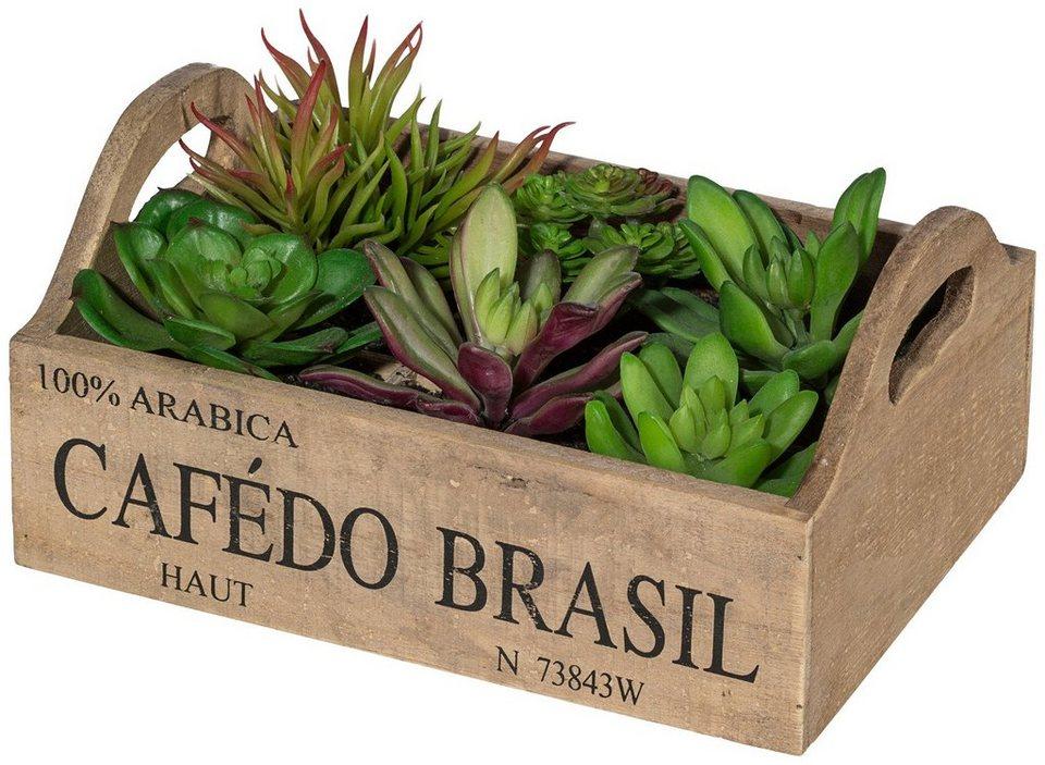 Kunstpflanze »Sukkulenten« inkl. Pflanzgefäß in grün