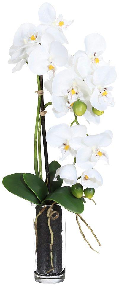 Kunstpflanze »Phalenopsis« weiß inkl. Pflanzgefäß (2 Pfl., H: je 50 cm)