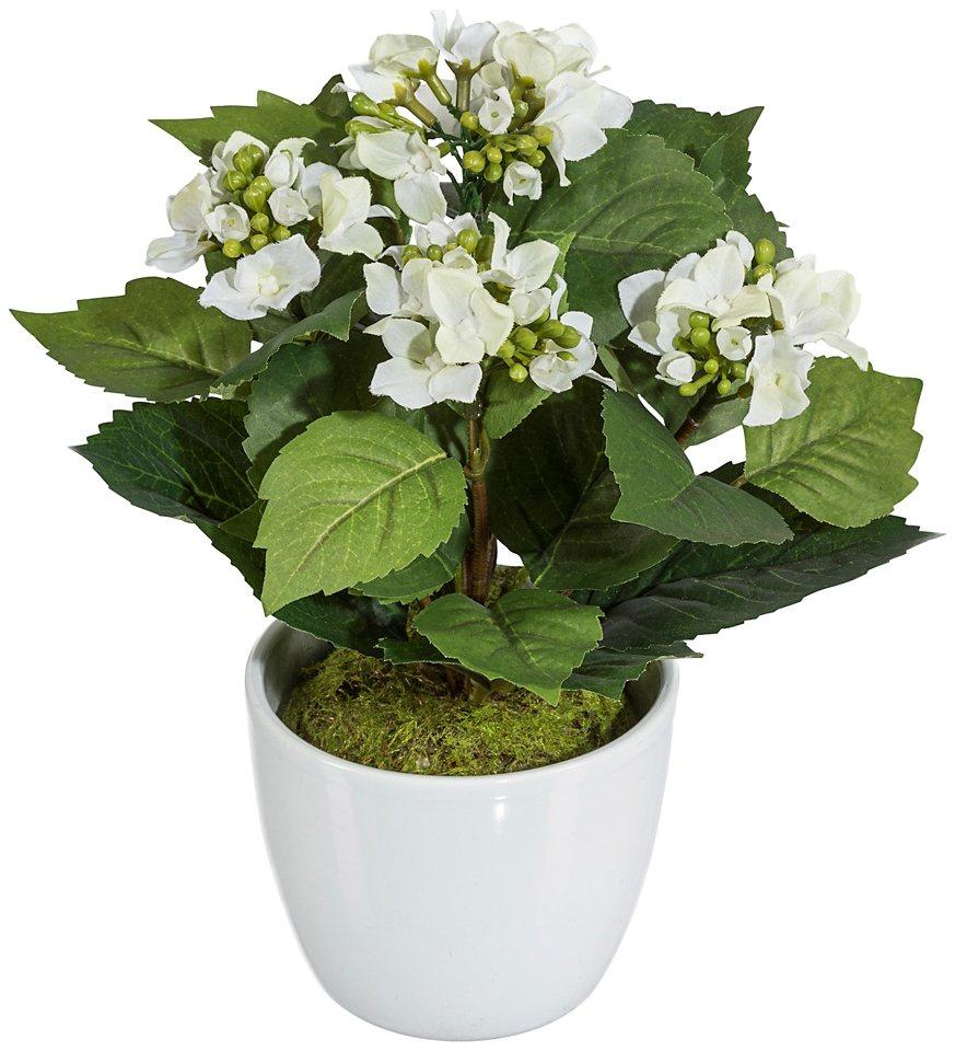 Kunstpflanze »Mini-Hortensie« weiß inkl. Pflanzgefäß (2 Pfl., H: je 25 cm) in weiß