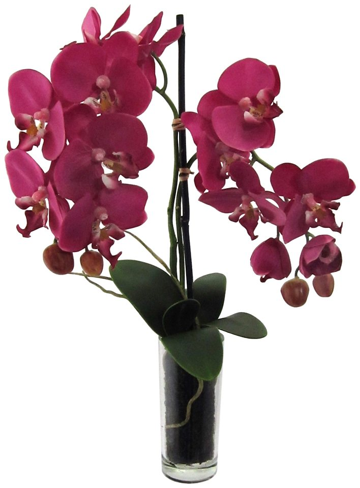 Kunstpflanze »Phalenopsis« lila inkl. Pflanzgefäß (2 Pfl., H: je 50 cm) in lila