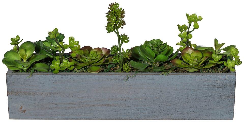 Kunstpflanze »Sukkulenten-Raumteiler« inkl. Pflanzgefäß in grün