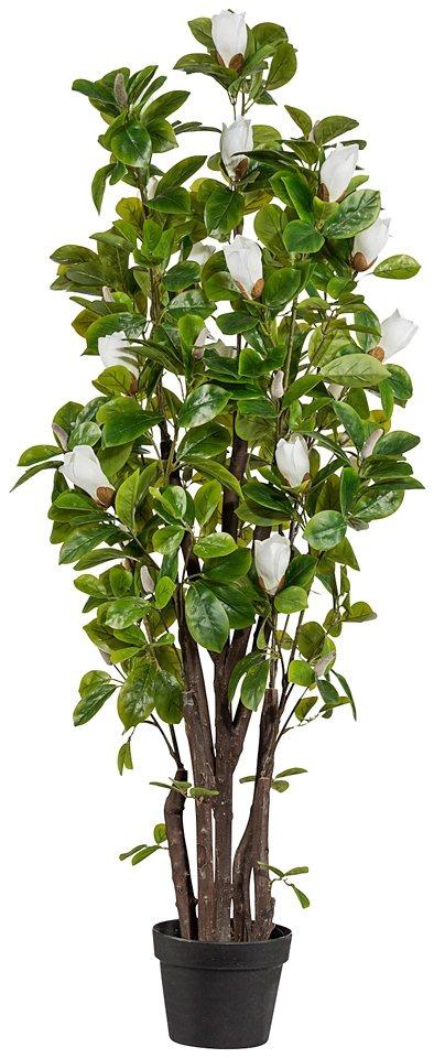 Kunstpflanze »Magnolienbaum« inkl. Pflanzgefäß (H: 125 cm) in natur