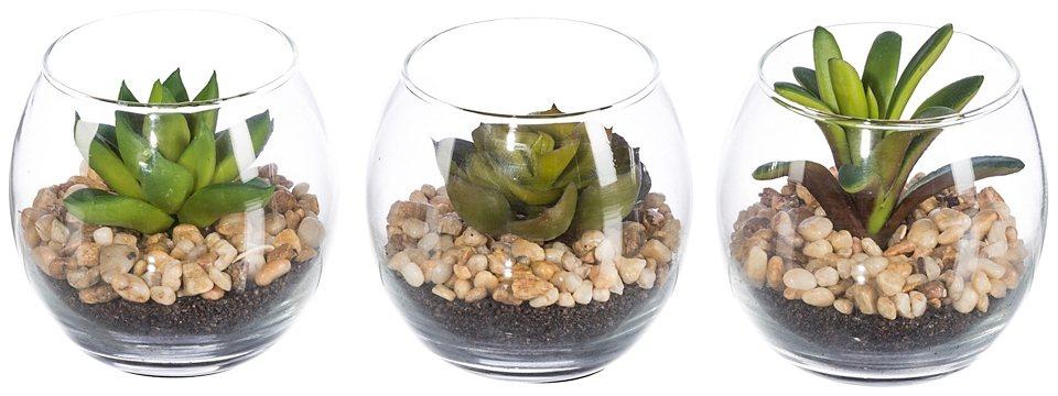 Kunstpflanze »Sukkulente« im Glas (3 Pfl.) in grün