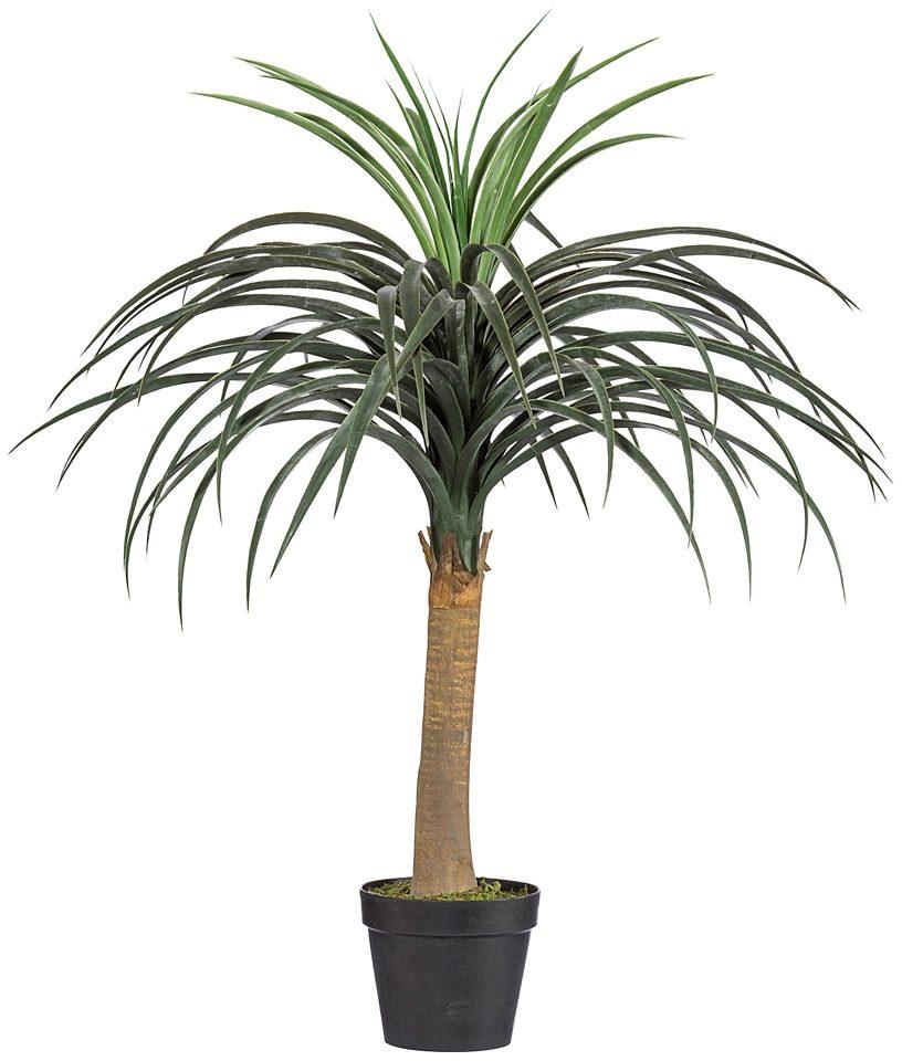 Kunstpflanze »Dracena« inkl. Pflanzgefäß (H: 80 cm)