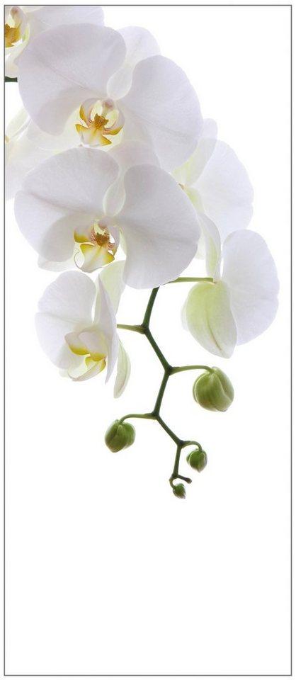 Badrückwand »shower«, Orchid Phala, in 2 Breiten in weiß