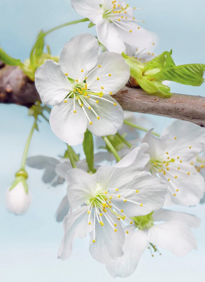 Komar Vliestapete »Blossom«, 184/248 cm in bunt
