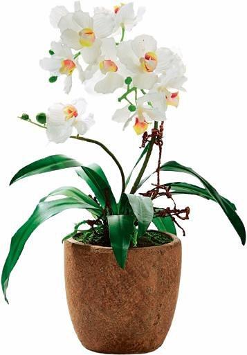 Home affaire Kunstblume »Orchidee Rusty« in braun