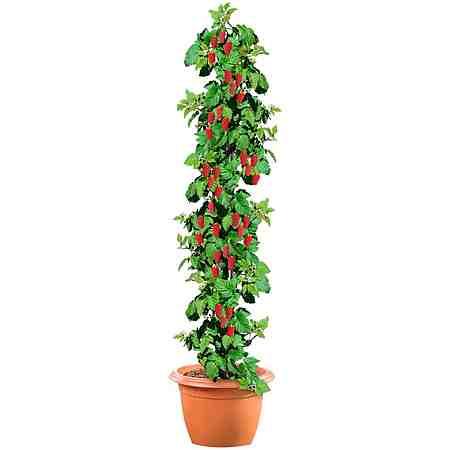 Baumarkt: Pflanzen