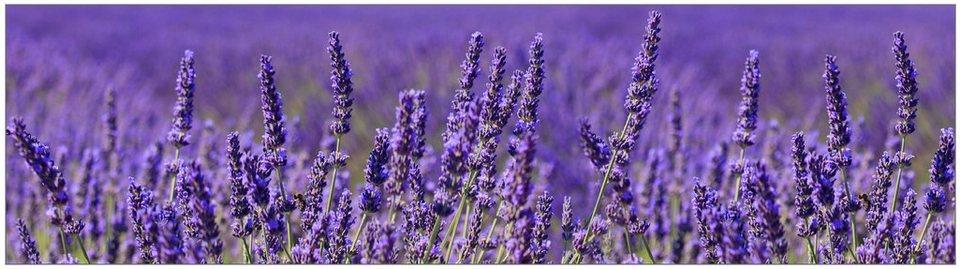 Küchenrückwand - Spritzschutz »profix«, Lavendel, 220x60 cm in lila