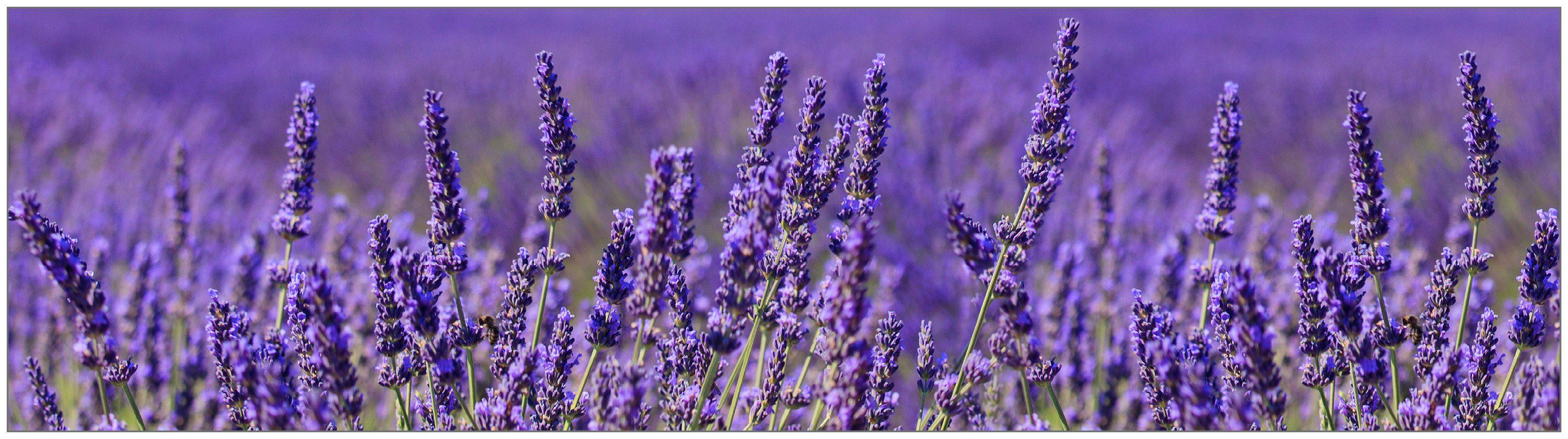 Küchenrückwand - Spritzschutz »profix«, Lavendel, 220x60 cm