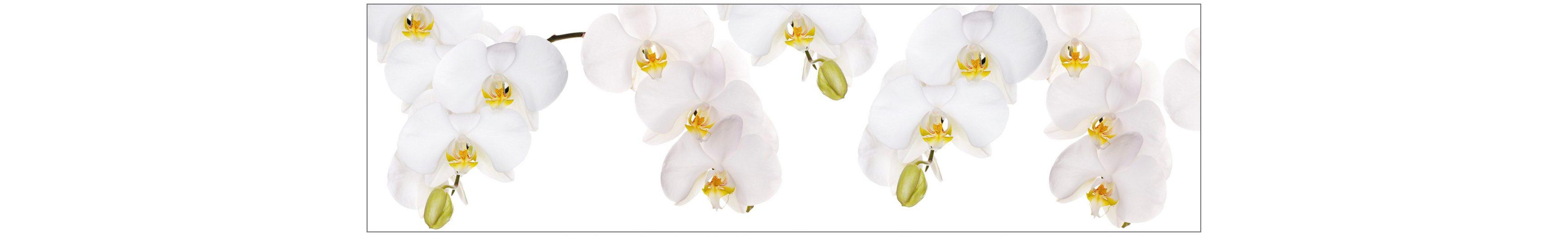 Küchenrückwand - Spritzschutz »profix«, Orchidee weiß, 220x60 cm