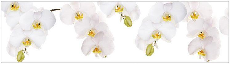 k chenr ckwand spritzschutz profix orchidee wei 220x60 cm online kaufen otto. Black Bedroom Furniture Sets. Home Design Ideas