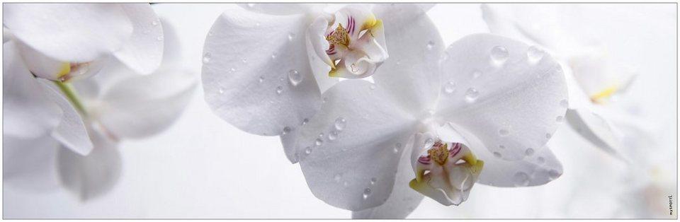 Badrückwand »aqua«, Aqua orchid, in 3 Breiten in weiß