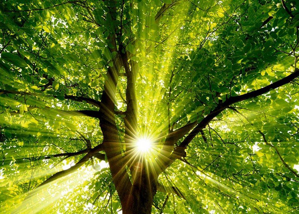 Home affaire Leinwandbild »smileus: Sonne strahlt explosiv durch den Baum«, 70/50 cm in Grün
