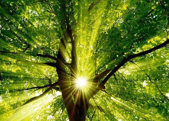 Home affaire Leinwandbild »smileus: Sonne strahlt explosiv durch den Baum«, 70/50 cm