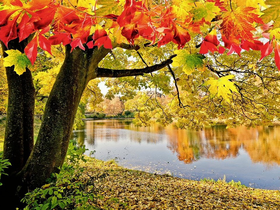 Home affaire Glasbild »D. Oberfrank-List: Wundervoller Herbsttag an einem ruhigen See«, 80/60 cm in Grün