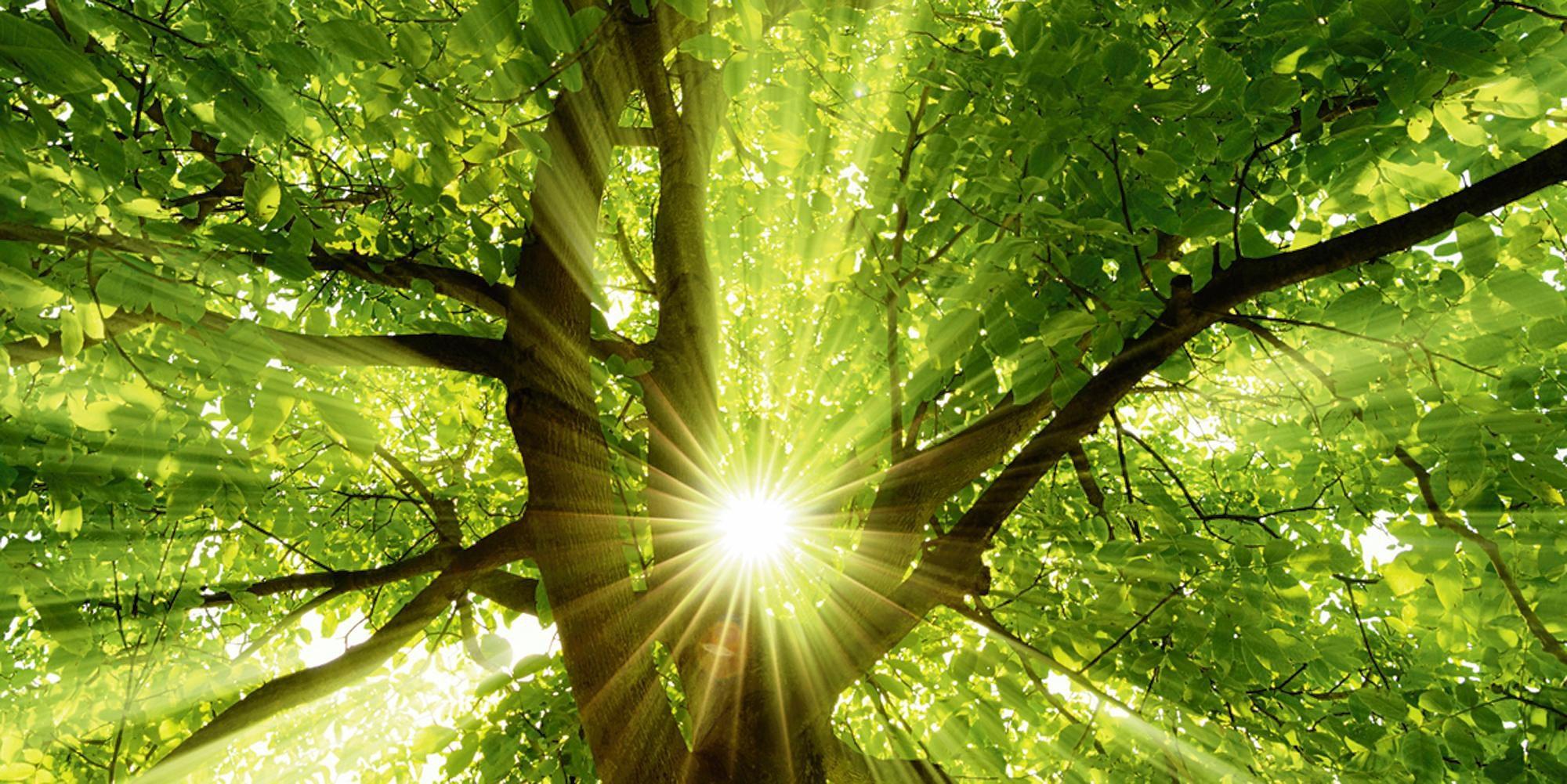 Home affaire Glasbild »smileus: Sonne strahlt explosiv durch den Baum«, 100/50 cm