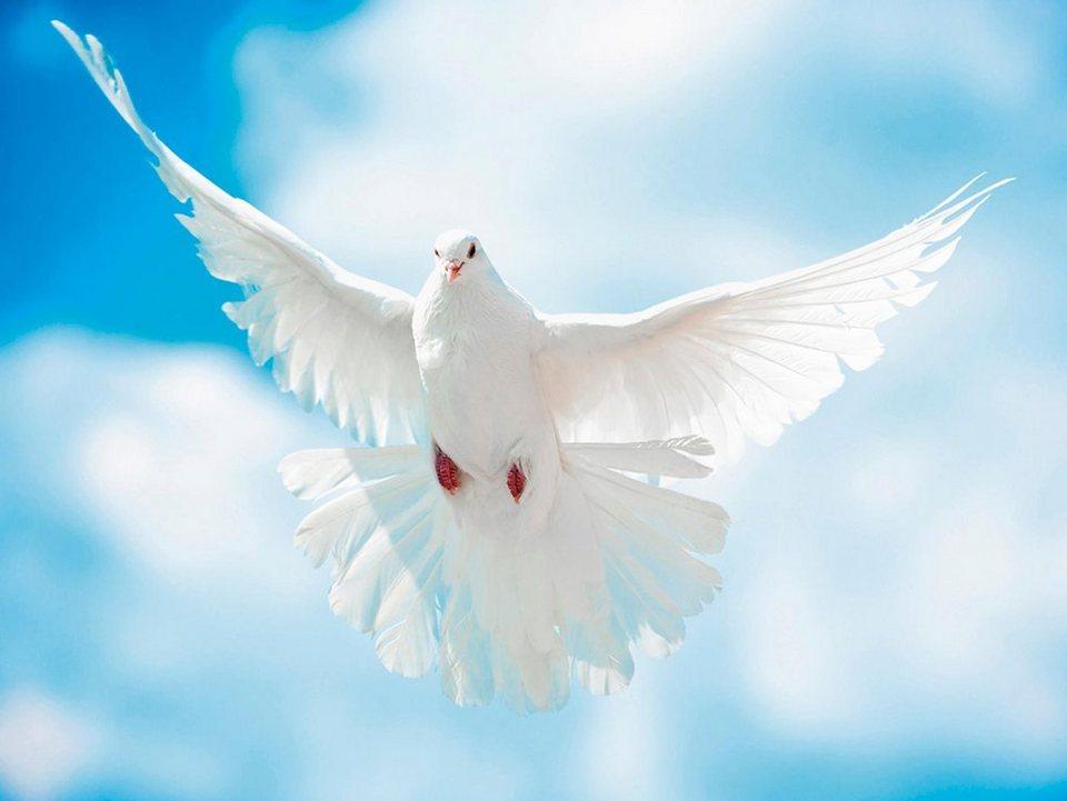 Home affaire Glasbild »A. Kuba: Taube mit ausgebreiteten Flügen vor der Sonne«, 80/60 cm in Weiß