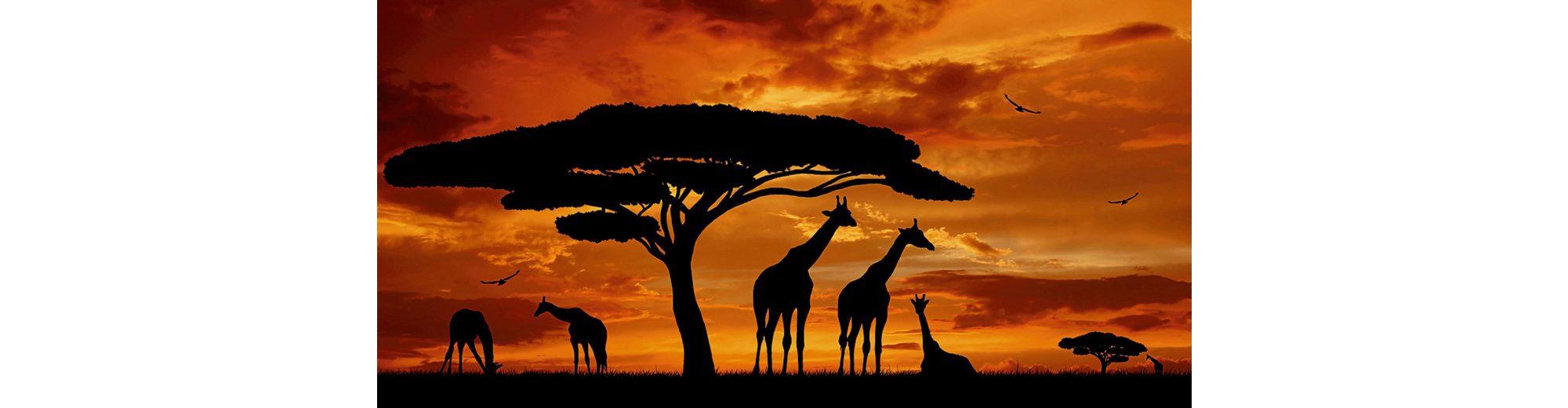 Home affaire Glasbild »vencav: Herde von Giraffen im Sonnenuntergang«, 100/50 cm