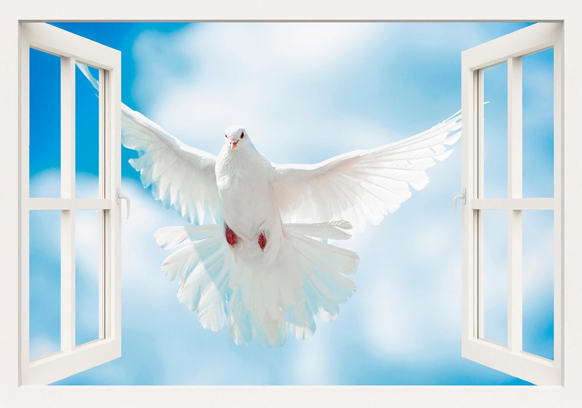 Home affaire Leinwandbild »A. Kuba: Taube mit ausgebreiteten Flügen vor der Sonne«, 100/70 cm