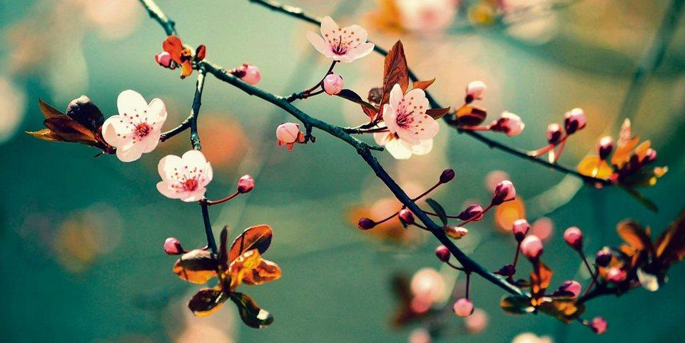 Home affaire Leinwandbild »Montypeter: Blühende japanische Kirsch Shakura«, 100/50 cm in Pink/Rosa