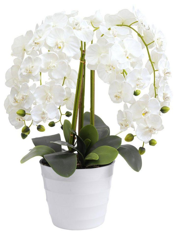 heine home Orchidee in weiß
