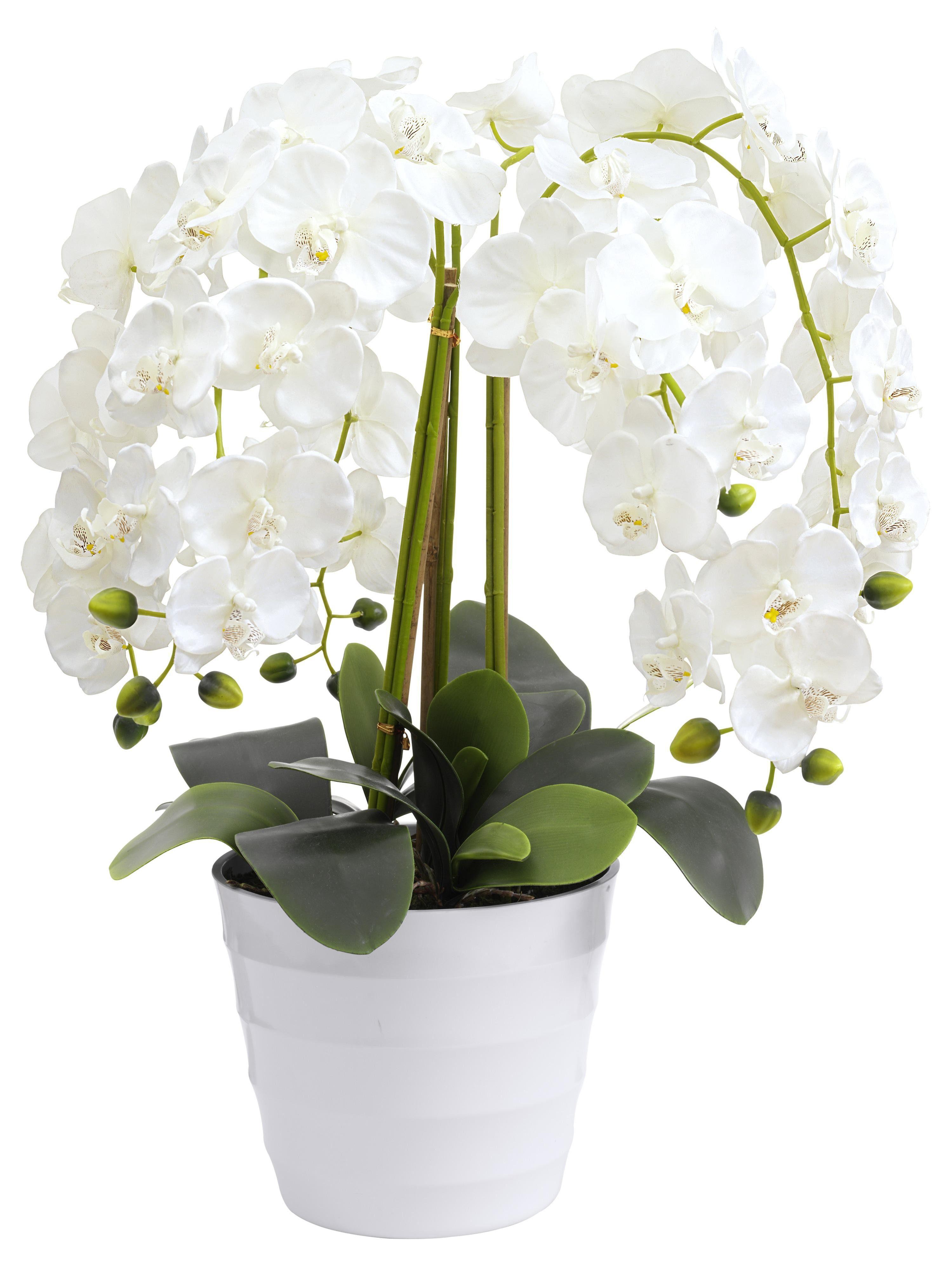 heine home Orchidee