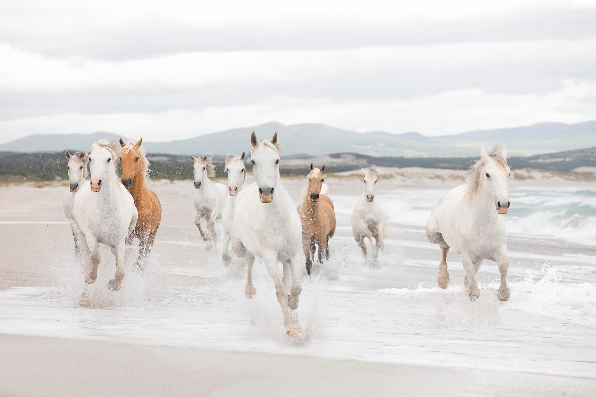 Komar Fototapete »White Horses«, 368/254 cm | Baumarkt | Komar