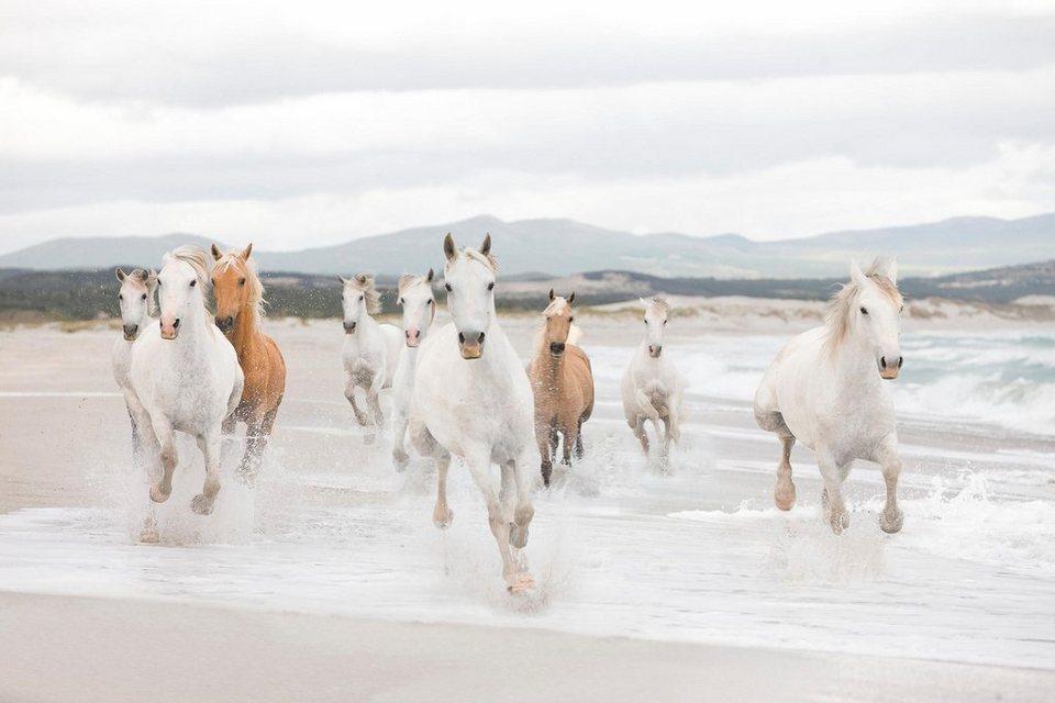 Komar Fototapete »White Horses«, 368/254 cm in weiss/beige