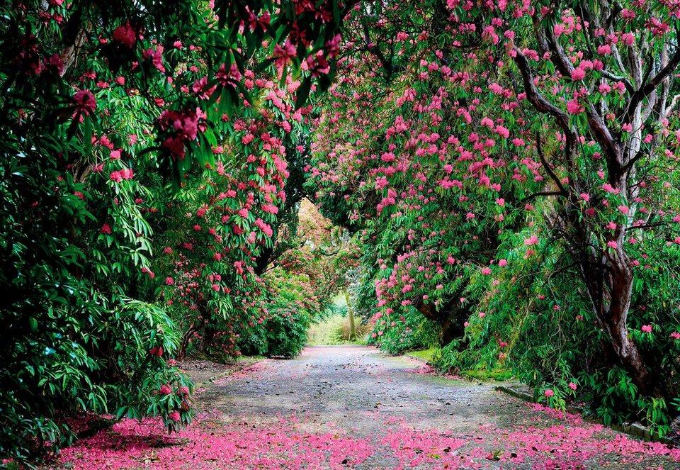 Komar Fototapete »Wicklow Park«, 368/254 cm in grün/violett