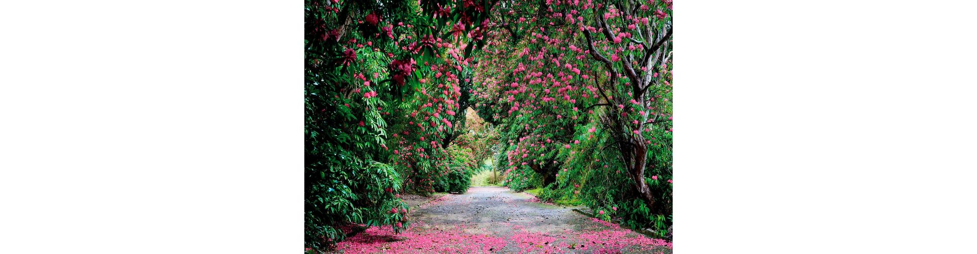 Komar Fototapete »Wicklow Park«, 368/254 cm