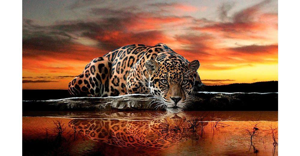 Home affaire Fototapete »Leopard«, 368/254 cm