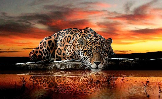 Fototapete »Leopard«