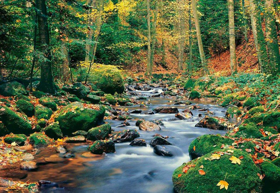 Home affaire Fototapete »Wald Fluß«, 366/254 cm in bunt
