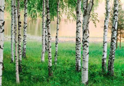Fototapete schwarz weiß wald  Fototapete kaufen » Postertapete & Bildtapete | OTTO