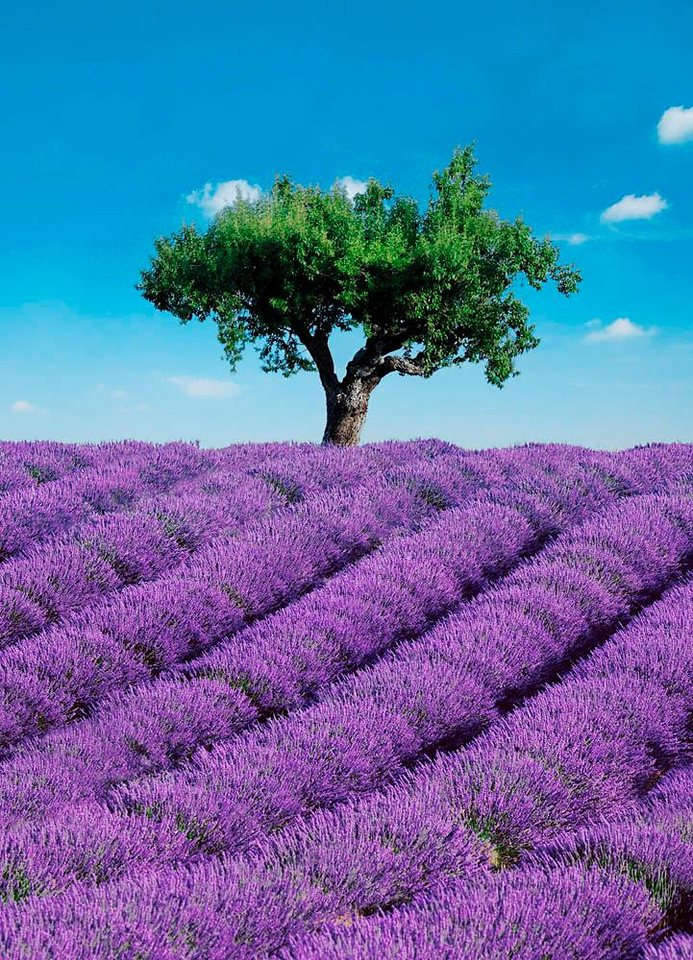 Home affaire Fototapete »Provence«, 183/254 cm in lila/blau