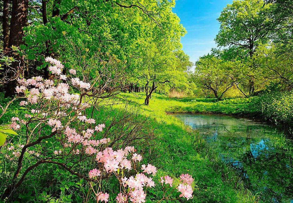 Home affaire Fototapete »Park im Frühjahr«, 366/254 cm in grün