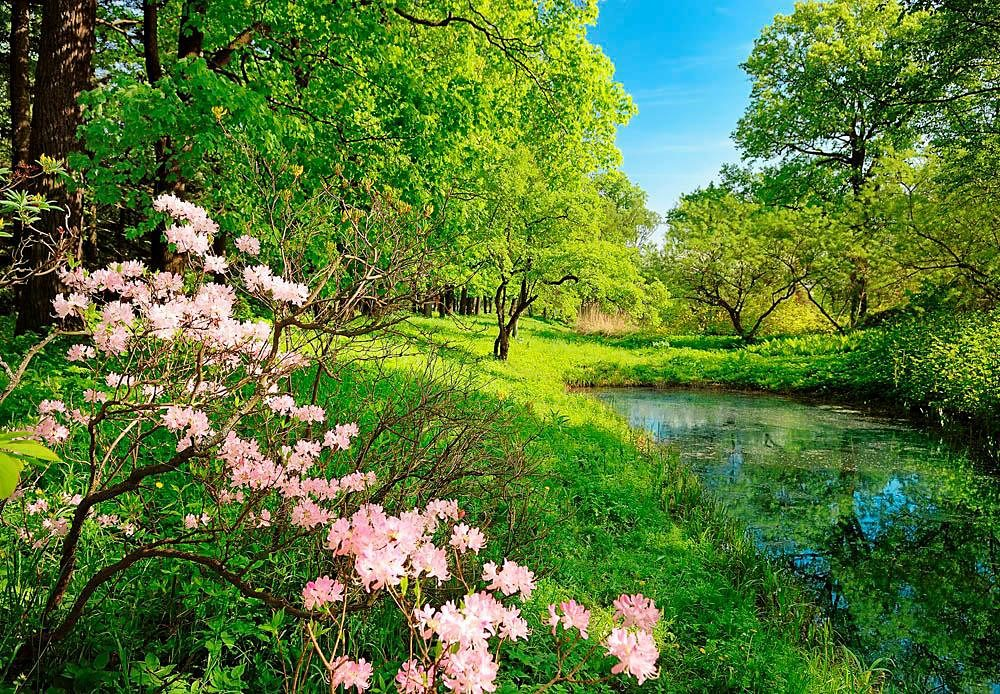 Home affaire Fototapete »Park im Frühjahr«, 366/254 cm